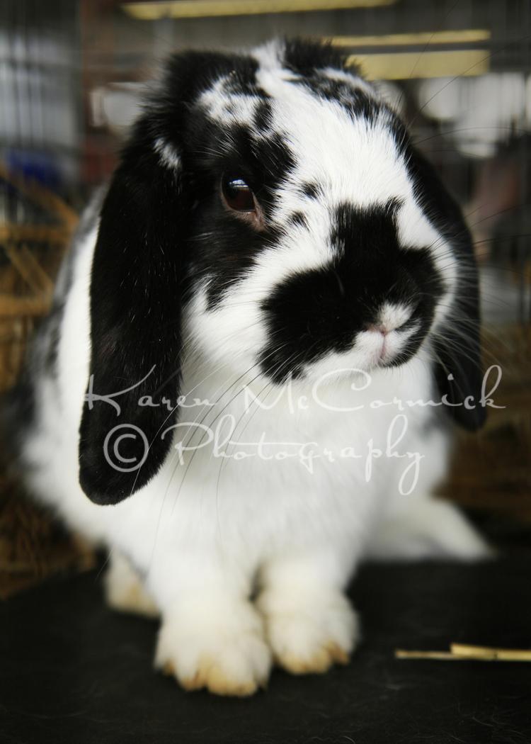 Bunny3808em-blog