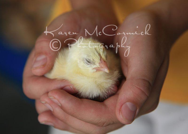 Chicken3753em-blog
